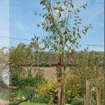 Bricostore Ghid – Cum Plantam Pomii
